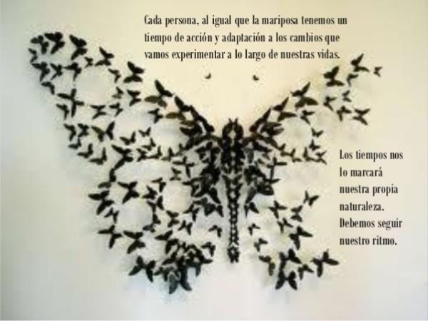 historia-de-una-mariposa-6-638-2